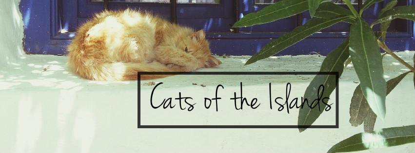 CatsCoverPhoto